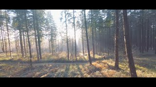 Flight in the woods - FPV Cinematic