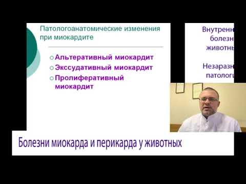 Болезни Миокарда и Перикарда у Животных (Ветеринарная Кардиология)