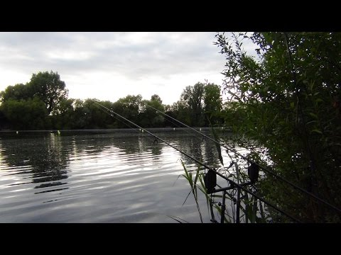 The Local Pond Part 1 – First Session – Carp Fishing