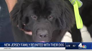 New Jersey Family Struck by COVID-19 Reunited With Dog | NBC New York
