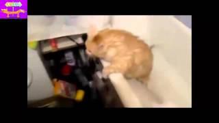 ЖЕСТЬ Издевательство над котом! Жертва халестирина =) Funny Pets