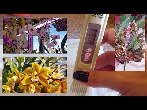 Как очистить воду для полива орхидей и других растений. Анализ развития.