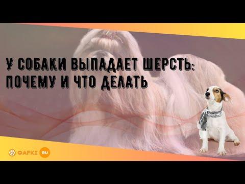 У собаки выпадает шерсть: почему и что делать