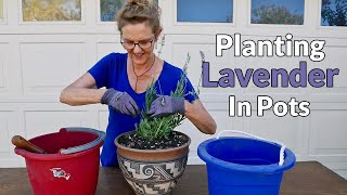 PLANTING LAVENDER IN POTS / JoyUsGarden