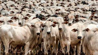 Em setembro, carne bovina sobe 3%, suína tem alta de 4,3% e frango avança 13,4%. Migração de consumo