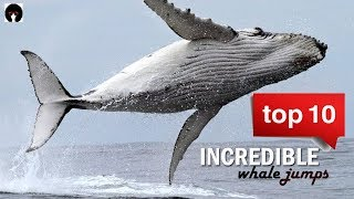 My Top 10 Whale Jumps. Incredible Whales On Camera! (revised)