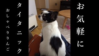 チワワのりんご~ブサ可愛いおしゃべり犬~今、タイタニックの女優さんの気分やねん・・落とさんとってな。