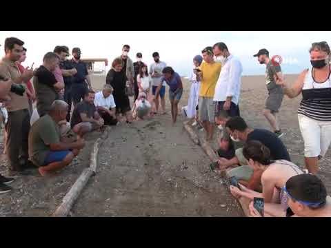 Carettalar denize açıldı