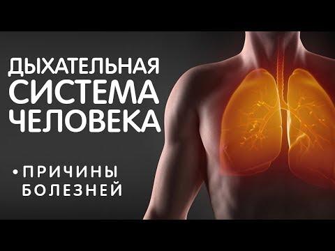 Причины ринита, синусита, кашеля, насморка, бронхита и пр. Дыхательная система!