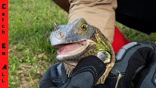 MONSTERS EATING IGUANAS! We Have to HELP SAVE THEM!