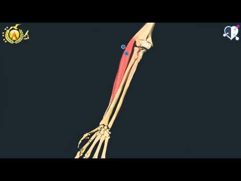 Osteocondrosi sulla barra
