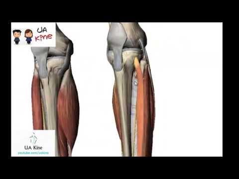 SHmorlja tratamiento de hernia de columna lumbosacra
