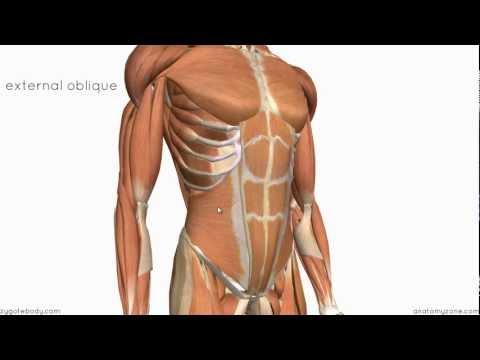 Jak pompować przednie mięśnie naramienne