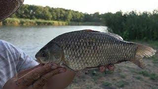 МАТЁРЫЙ КАРАСЬ НА РЕКЕ, рыбалка на фидер , ловля карася