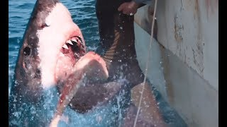 47 meters down : uncaged (2019) Video