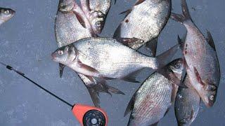 Платная рыбалка в воскресенском районе