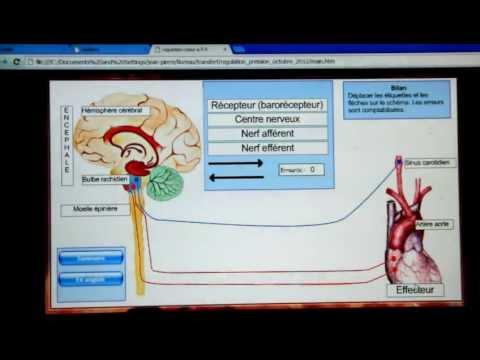 Qui normalise les comprimés de la pression artérielle