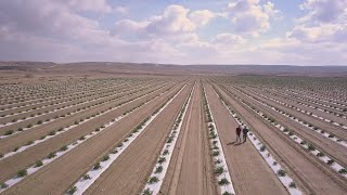 Agriculture in the Negev: Today's Desert Pioneers (5-minute clip)