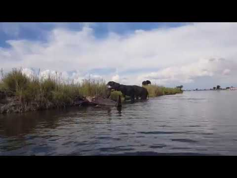 Game cruise on the Chobe River