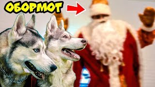 ДЕД МОРОЗ - ОБОРМОТ ( Хаски Бандит feat Mister Booble ) Премьера клипа. Поющие собаки