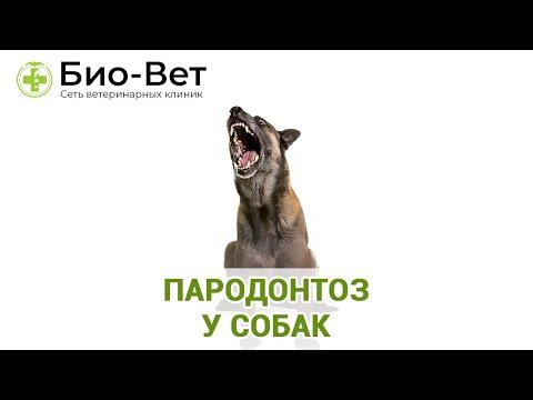 Пародонтоз у собак. Ветеринараня клиника Био-Вет.