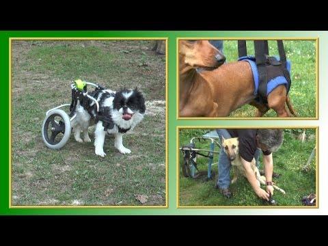 Sanitätshaus für Tiere - TierheimTV informiert