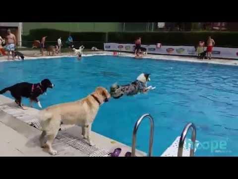 Al agua patas 2015 - Día de piscina para perros