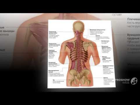 Мышцы влияющие на тазобедренный сустав