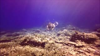 Dykning I El Nido