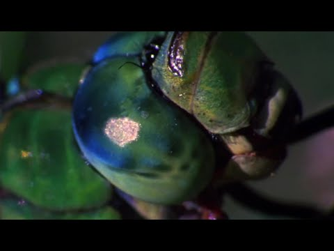 Dragonfly vs Damselfly Deadliest Showdowns Earth Unplugged #01