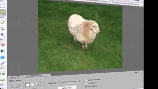 Photoshop Elements 12 Tutorial - How to Use the Magic Wand Tool in Photoshop Elements 12