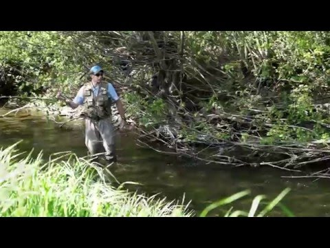 Small Stream Dryfly Action