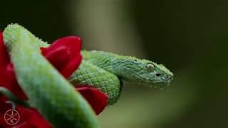 Смотреть онлайн Ролик 4К: Природа и живность Коста-Рики