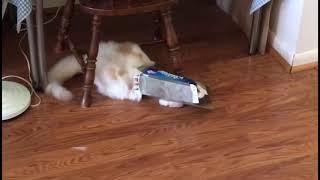 Смешной котик забавляет глаз | Приколы до слез - Collab #71