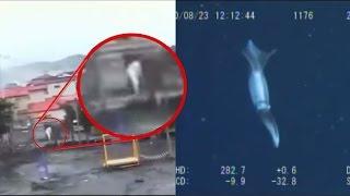 5 Extrañas CRIATURAS Captadas en VIDEO en el TSUNAMI DE JAPON |FoolBox TV VIDEO DEL TSUNAMI DE JAPON