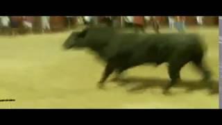 preview picture of video 'Fiestas Meco 2014 Encierro Nocturno, Salida Toro 2'