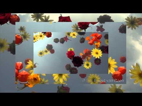 Zweefbloemen
