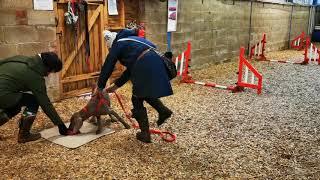 Starting puppy agility training