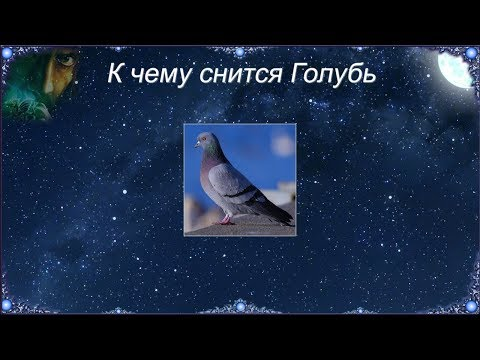 К чему снится Голубь (Сонник)