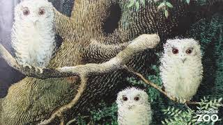 "Book Reading: ""Owl Babies"""