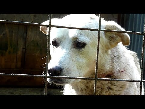 Dog Was Crying For Help But Nobody Heard Him, Until One Day