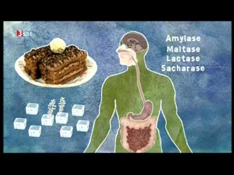 Wie Blutzuckerspiegel schnell Medikamente senken