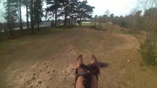 BB-Paarden