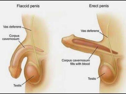 Tratamiento farmacológico de la próstata