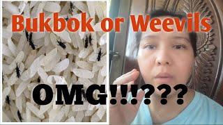 How to get Rid of Rice WEEVILS/Papaano matanggal ang Bukbok sa Bigas/tina likesNhappiness