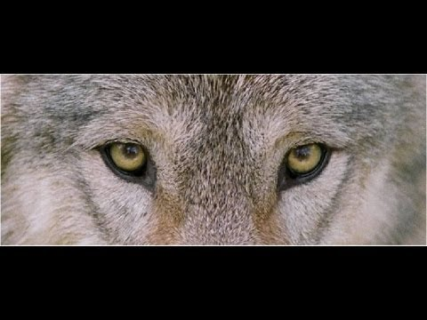Wolf Eye Makeup Tutorial