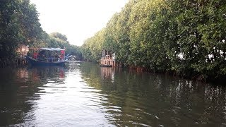 Berkeliling Hutan Mangrove Tarumajaya dengan Perahu Motor