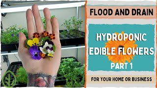 How-to For Edible Flowers - Part 1 -  On The Grow