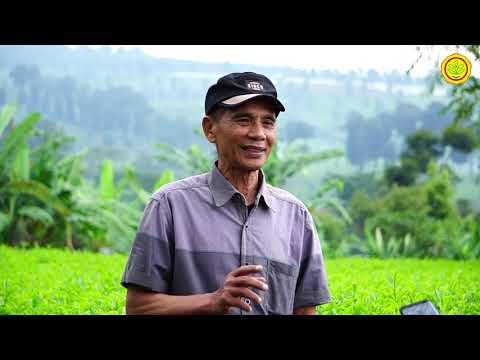 Teh Indonesia Dari Lembang Bandung Jawa Barat