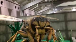 【 The huge insect world 】 巨大昆虫ワールド